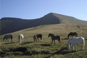 Pen y Fan ponies pont cymru