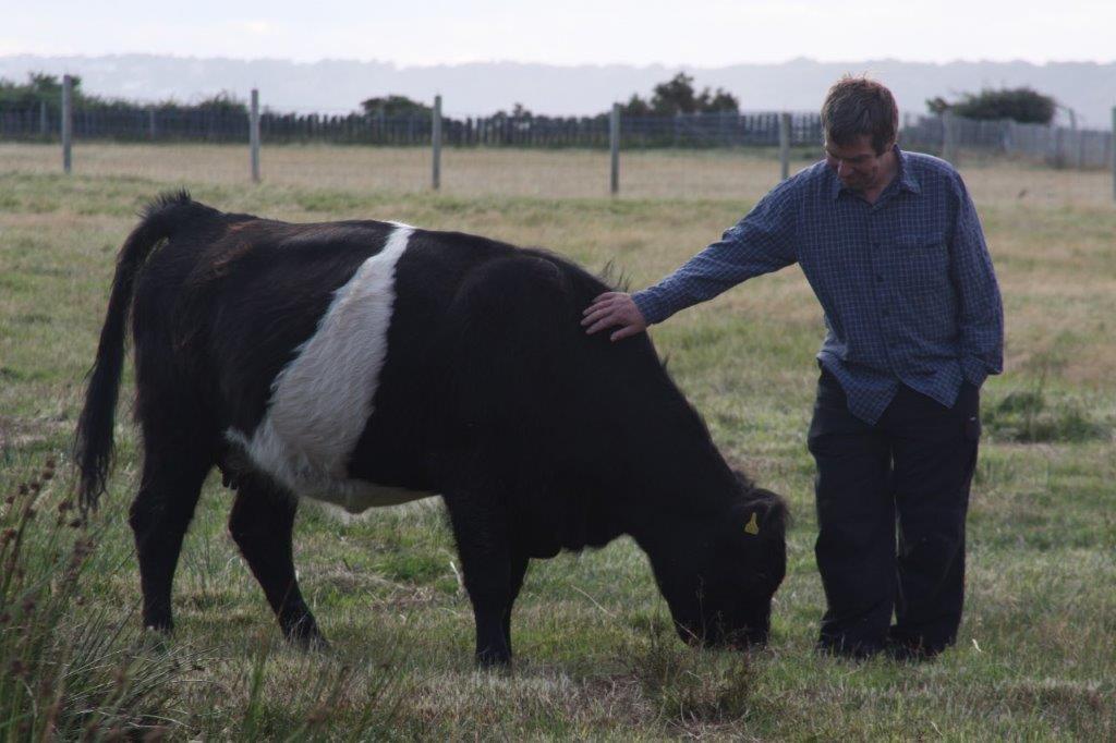 Livestock outline