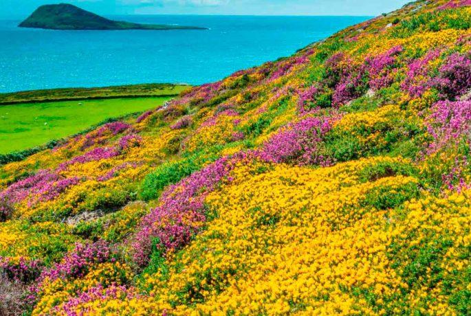Grazed coastal heath habitat, habitats such as these can attract funding