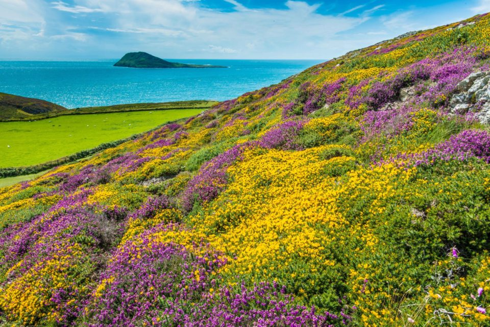 Benefits of grazing for coastal heath