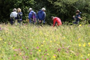 Training Create a conservation plan PONT Cymru