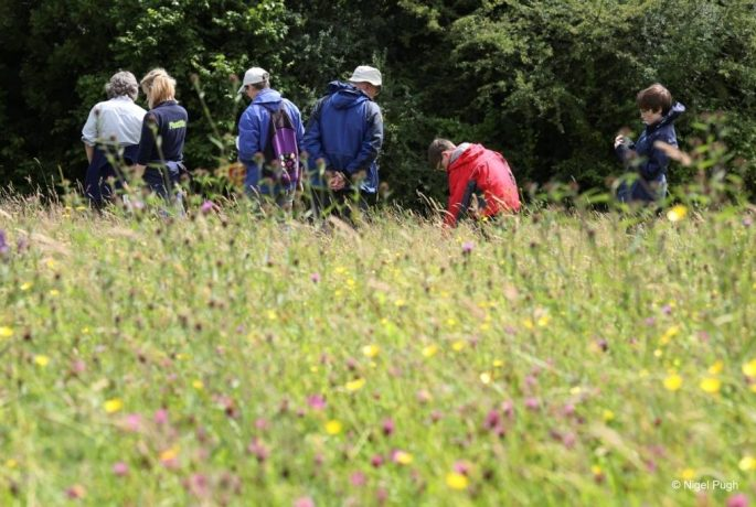 Training Create a conservation plan PONT Cymru