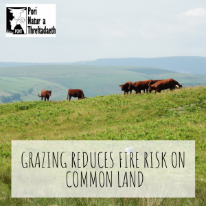 Grazing Reduces Fire Risk on COmmon Land PONT Cymru