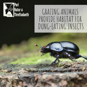 grazing Animals provide habitat for dung-eating insects PONT Cymru