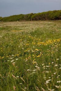 Meadow cwm colhuw pont cymru vaughn (9)
