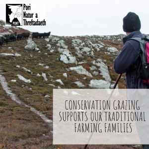 Conservation Grazing supports traditional farming families PONT Cymru