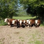 Herefords-Wyeswood-Common-Gwent-Wildlife-Trust-Pont-Cymru