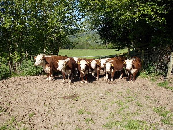 Herefords-Wyeswood-Common-Gwent-Wildlife-Trust-Pont-Cymru