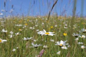 meadow hay making pont cymru