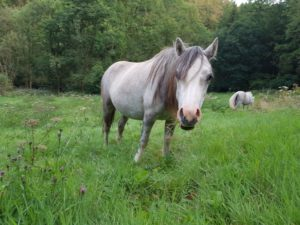 Grazer of the Week Milly Carmarthenshire Meadows Group PONT Cymru