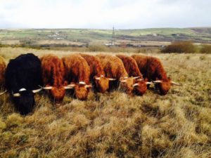 highlands coity wallia commons pont cymru
