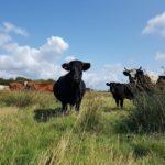 wren the welsh black wwt llanelli pont cymru salt marsh
