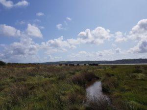 wwt llanelli salt marsh pont cymru conservation grazing