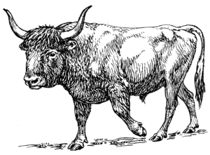 aurochs source wikipedia commons