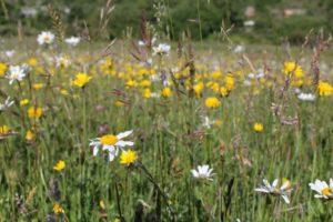 prior's meadow conservation grazing pont cymru