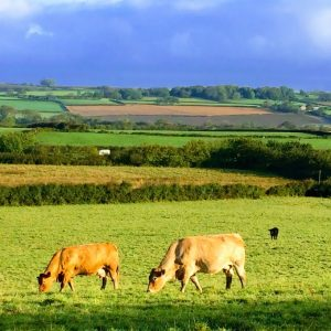 Slade Farm Organics Polly Davies farming with nature PONT Cymru