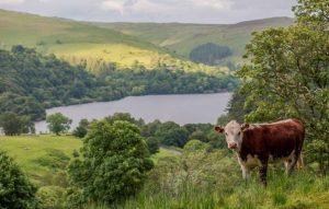 sorcha lewis elan valley conservation grazing pont cymru