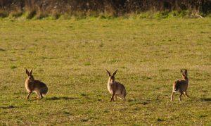 Hares Slade Farm Organics farming with nature nature friendly farming polly davies