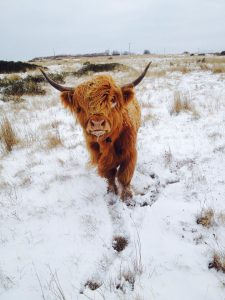 highlands woolies wellies wine