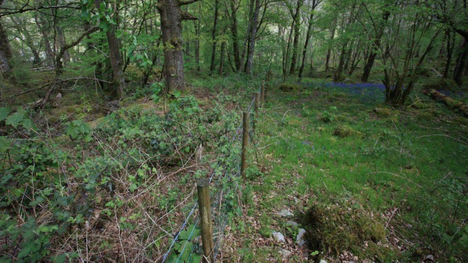 conservation grazing woodland