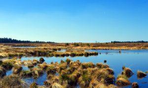 peat bog blanket bog pont cymru conservation grazing
