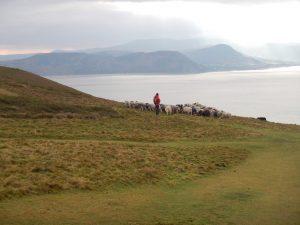 close shepherding conservation grazing coast jan sherry pont cymru