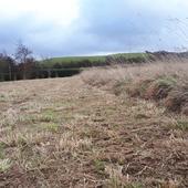 cut rank grassland dolau dyfi