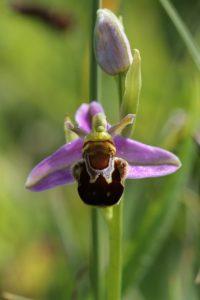 Dolau Dyfi Wildflower Spotter Survey