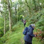 Maintenance Walks Pont Cymru Dolau Dyfi