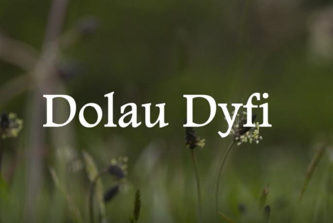 Dolau dyfi project pont cymru