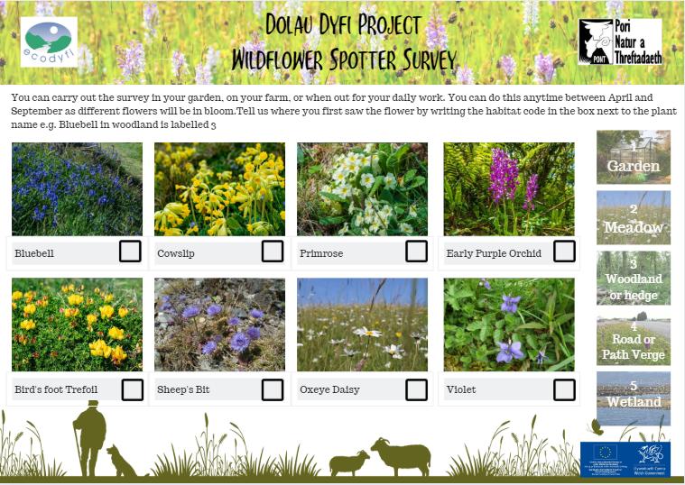dolau dyfi wildflower spotter sheet