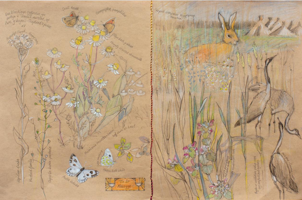 ann thomas wildlife artist talk for dolau dyfi project